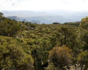 Mariepskop plantegroei met die Drie Rondawels in die agtergrond